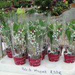 muguet-premier-mai-L-kWOdgw